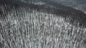 Winter forest. Aerial. Drone Footage snowy winter forest aerial. stock video footage