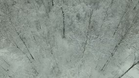 Winter forest aerial view stock video