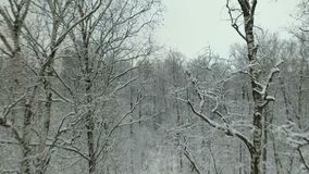 Winter forest aerial view stock footage