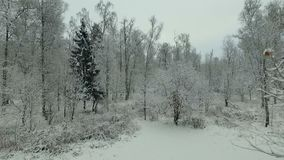 Winter forest aerial view stock video footage