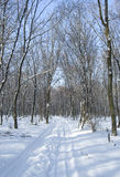 Winter forest alley Royalty Free Stock Photography