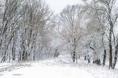 Winter forest with road Royalty Free Stock Photos