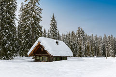 Winter forest in Alps Stock Images