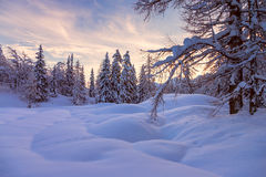 Winter forest in Alps near Vogel sky center in Slovenia Stock Images
