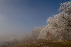 Winter. Forest in winter as the fog was rising Royalty Free Stock Photos