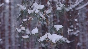 Winter forest, ate fabulous branches covered white snow swaying in the wind. Winter forest, ate fabulous branches covered white snow swaying in wind stock video