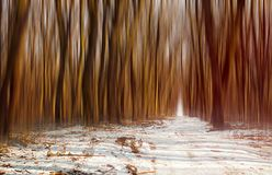 Winter forest atmosphere Royalty Free Stock Image