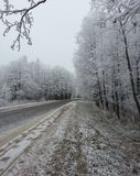Winter forest background Royalty Free Stock Images