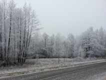 Winter forest background Royalty Free Stock Photos