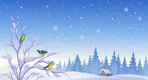 Winter forest background Stock Photos