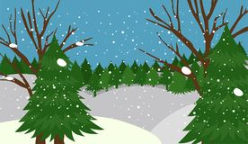 Winter forest background   Stock Photography