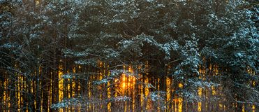 Winter forest background. During sunset time royalty free stock photos