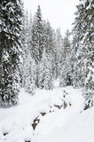 Winter forest in Bansko Royalty Free Stock Photography