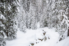 Winter forest in Bansko. Royalty Free Stock Photography