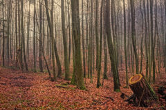 Winter Forest in Bavaria Royalty Free Stock Image