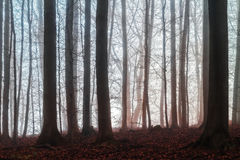 Winter Forest in Bavaria Stock Images