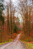 Winter Forest in Bavaria Stock Photography