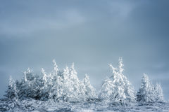 Winter forest. Beautiful winter covered the frozen forest with warm sun rays and snow Stock Image