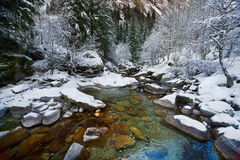 Winter forest. On a beautiful winter day in the forest stock photography