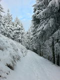 Winter forest. Beautiful winter landscape Stock Photos