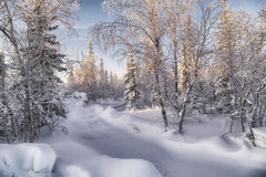 Winter forest. Beautiful winter landscape. winter forest Royalty Free Stock Photos
