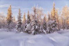 Winter forest. Beautiful winter landscape. winter forest Stock Photos