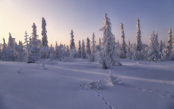 Winter forest. Beautiful winter landscape. winter forest Stock Photo