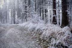 Winter forest with beautiful light. Winter forest with ice beautiful light Royalty Free Stock Photos