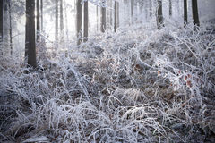 Winter forest with beautiful light Royalty Free Stock Image