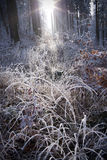Winter forest with beautiful light. Winter forest with beautiful morninglight Stock Image