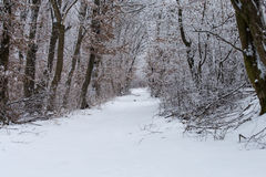 Winter forest. Beautiful winter forest road landscape Royalty Free Stock Photography