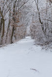 Winter forest. Beautiful winter forest road scene Stock Photos