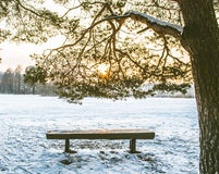 Winter forest and bench Stock Photography