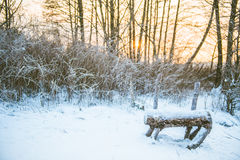 Winter forest and bench Stock Photos
