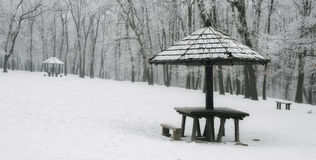Winter forest bench. Panorama landscape Stock Photography