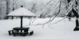 Winter forest bench. Panorama landscape Royalty Free Stock Photos
