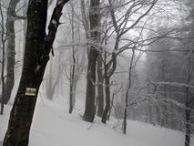 Winter forest in Bieszczady, Poland. Winter forest in Bieszczady, Poland, Europe.Winter background. Trees covered with snow and frost Royalty Free Stock Photo