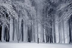Winter forest in black and white Royalty Free Stock Images