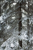 Winter forest closeup shot Royalty Free Stock Photo