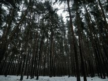 Winter forest calm and silence royalty free stock photos