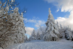 Winter forest of Carpathians Stock Image