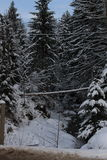 In the winter forest. Carpathians. A lot of snow, trees bundled up in snow Royalty Free Stock Image