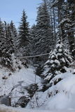 In the winter forest. Carpathians. A lot of snow, trees bundled up in snow Royalty Free Stock Photography