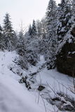 In the winter forest. Carpathians. A lot of snow, trees bundled up in snow Royalty Free Stock Photo
