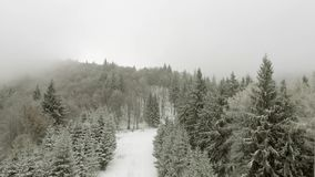 Winter forest through clouds. Aerial view of winter forest with frosty trees, through clouds stock video