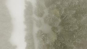 Winter forest through clouds. Aerial view of winter forest with frosty trees, through clouds stock footage