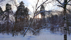 Winter forest in the cloudy afternoon Stock Photo