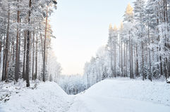 Winter forest. cold. Russia Stock Photo