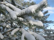 Winter forest covered with blue sky. royalty free stock images