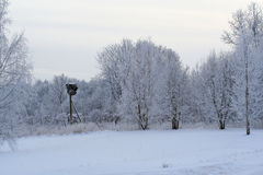 Winter forest covered with snow andh stork nest Royalty Free Stock Image